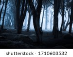 Dark Foggy Forest And Path...