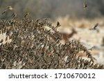 Flock Of Gathering Birds...
