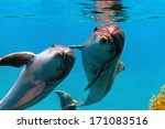 two funny dolphins smiling... | Shutterstock . vector #171083516