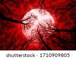 Horror Forest Background  Full...