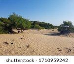 Sandy Wild Beach With Trees An...