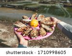 Oysters Plate  Cancale  Breton...