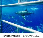 A View Of A Great White Shark...