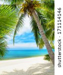 green tree on a white sand... | Shutterstock . vector #171114146