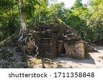 Tree Growing On Top Of Ruins Of ...