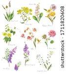 set of watercolor summer meadow ... | Shutterstock . vector #1711820608