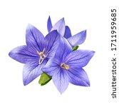 Tender Bright Bluebell Flowers...