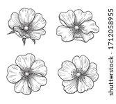 hand drawn dog rose flowers... | Shutterstock .eps vector #1712058955