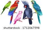 exotic birds set. multicolored... | Shutterstock . vector #1712067598