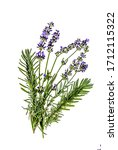 A Sprig Of Lavender Plants On A ...