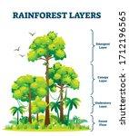 rainforest layers vector... | Shutterstock .eps vector #1712196565
