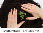 Earth Day And Ecology.plant In...