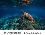Sea Turtle Glides In Blue Ocean....