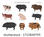 Pig Breeds Collection 5. Farm...