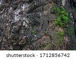 Green Moss Fern  On Brown Bark...