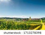 Vineyard Of A Farm At Southern...