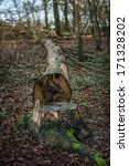 felled tree by the trunk of the ... | Shutterstock . vector #171328202