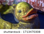Dirty Old Yellow Toy Duckling