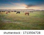 Horses Grazing On Grassland...