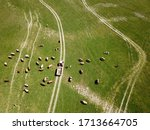 Top View Of Heard Of Cattle And ...