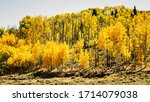 View At The Colorful Aspen...