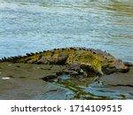 Corcovado National Park  Osa...