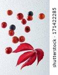 leaf | Shutterstock . vector #171422285