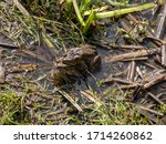 Picture With Common Frogs...