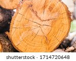 A Section Of A Tree. Wood...