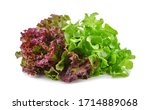 Fresh Red And Green Lettuce...
