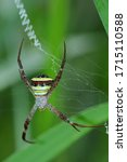 Spiders In The National Park At ...