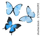 Blue Tropical Butterflies...