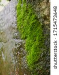 Thick Green Moss And Flowing...