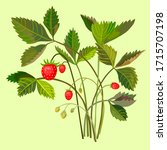 vector illustration wild... | Shutterstock .eps vector #1715707198