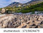 Humboldt Penguin Colony ...