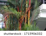 bamboos and exotic plants at a...   Shutterstock . vector #1715906332