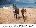Miniature Horses And Donkeys At ...