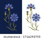 stylized cornflower vector...   Shutterstock .eps vector #1716293755