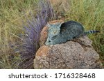 African Cat Posing On Rock With ...