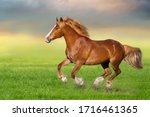 Red Horse Run Gallop On Spring...
