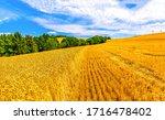 Agriculture Farm Wheat Field...
