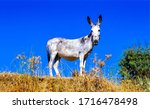 Donkey In Nature Scene View