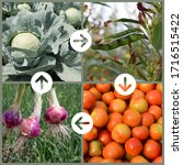 Small photo of Collage Explaining Crop rotation concept in agriculture. Leaf, Legume, Fruit and Roots crops are planted in sequence to avoid exhausting the soil and to control weeds, pests, and diseases.