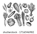 fresh vegetables. big set. ink... | Shutterstock .eps vector #1716546982
