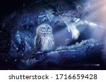 Sleeping Owl In Fantasy...