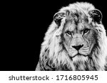 Lion With A Black Background In ...