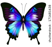 Stock vector isolated butterfly vector illustration 171681638