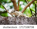 Close Up Of Squirrel Resting O...