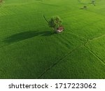 Aerial Rice Field With Pattern...