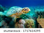 Sea Turtle Underwater Scene....